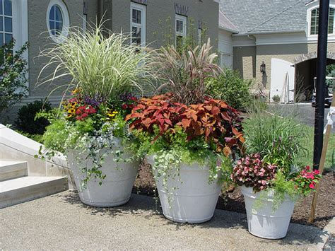 potted plant idea flickr photo sharing