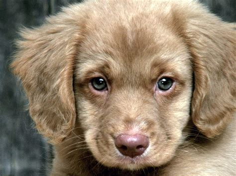 places to sell puppies for free 1000 images about puppies on
