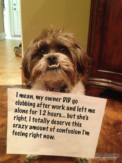 confused puppy these pictures put shaming to shame