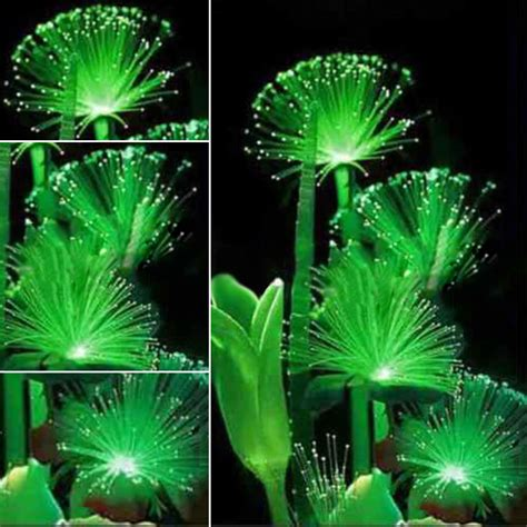 rare 100pcs emerald fluorescent flower seeds night light emitting plants new ebay