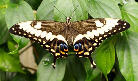 Friday Kate Mckinnon Tucson Botanical Gardens Butterfly Exhibit