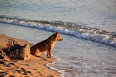 casas rurales en cantabria que admiten perros casas rurales en san vicente de la barquera que admiten