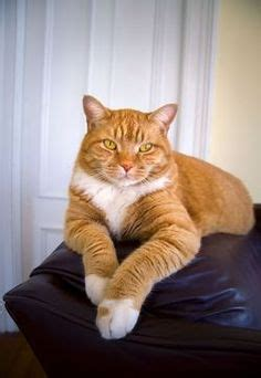 how to keep cats off the couch 1000 images about cats in orange on pinterest orange
