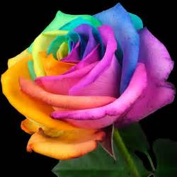 Flowers Delivery London - send a single happy rose buy a single happy rose post