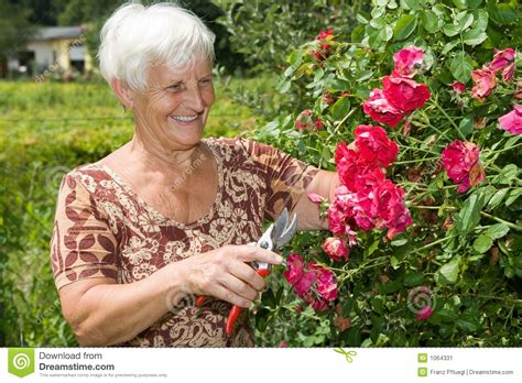 Grandmas Garden by Is Cutting Flowers And Roses In Garden Stock