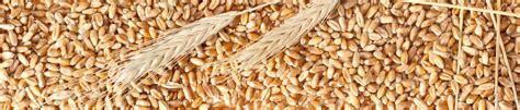 polifenoli alimenti polifenoli archivi macchine alimentari