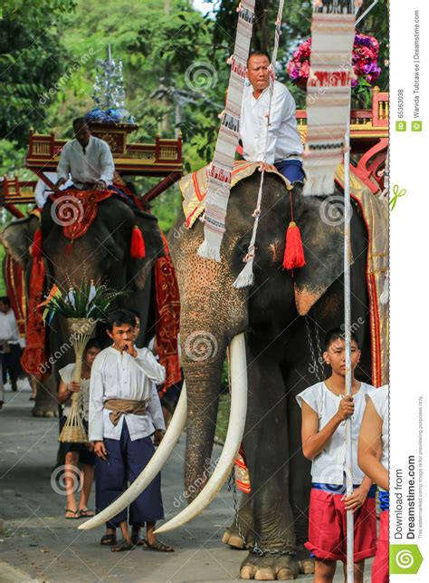 Elephant Thailand ,Elephant ,animal Editorial Stock Photo ...