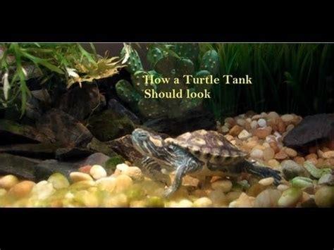 """turtle tank setup """"red ear slider"""" (res) """"live plants"""