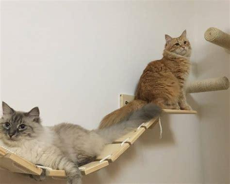 Scale Per Gatti by Scale Percorsi E Mensole Per Gatti Arricchimento