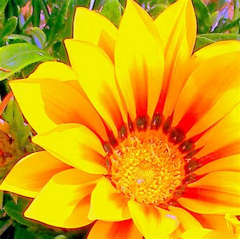 bright flower edited photo flickr photo sharing
