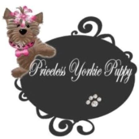 priceless yorkie puppy priceless yorkie puppy terrier breeder in jackson michigan
