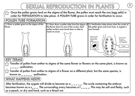 plant reproduction worksheet plant reproduction worksheet pack by beckystoke teaching resources tes