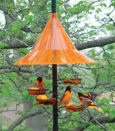 tips for attracting orioles to your yard duncraft s wild