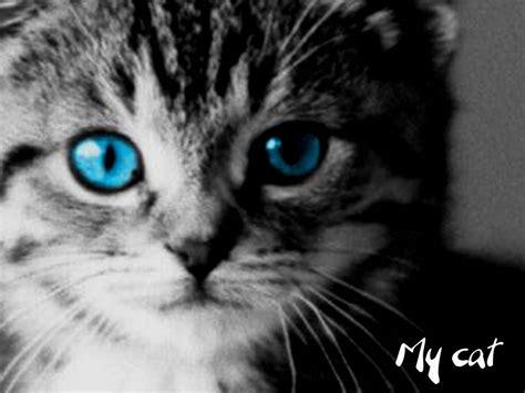 chats rooms les plus belles photos de chats photos animaux