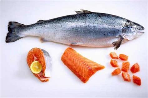 Daftar Keranjang Ikan daftar harga ikan salmon hari ini april 2018 terbaru harga binatang