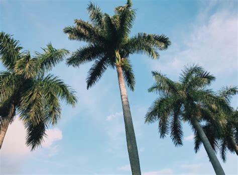 palm trees  tumblr