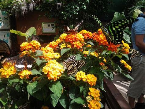 casa delle farfalle montegrotto casa delle farfalle e bosco delle fate di butterfly arc