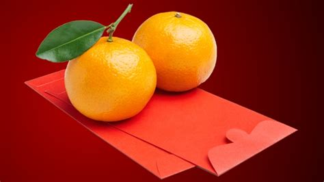 new year lucky oranges traditions design fissj shan shan