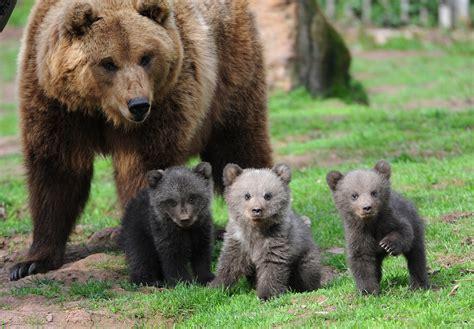 bear s blogdailyherald