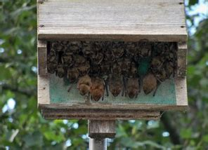 where to put a bat house in your yard welcome bats to your cabin this spring lake home cabin