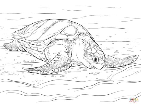 hard turtle coloring pages olive ridley sea turtle coloring page free printable
