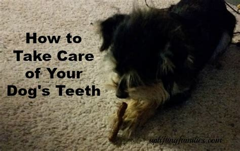 how to take care of puppies how to take care of your s teeth sweepstakes ad