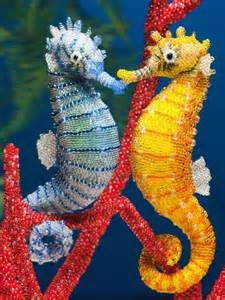 colorful seahorse aren t they beautiful