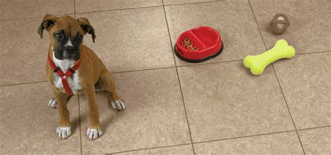 flooring for dogs antibacterial flooring for dogs meze