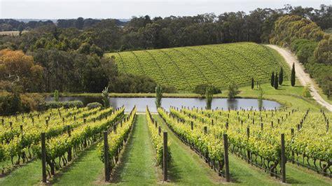 Garden Vineyards The Garden Vineyard 2015