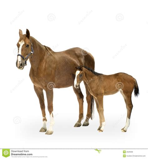 mare clipart foal clipart clipart suggest