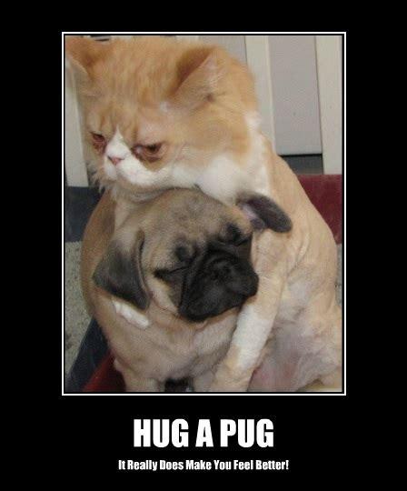 Pug Memes - funny pug dog meme pun lol lol dog breeds picture