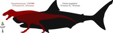 megalodon shark size megalodon shark compared to t rex
