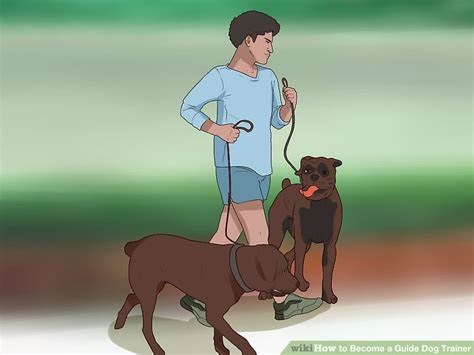 guide dog trainer  steps  pictures