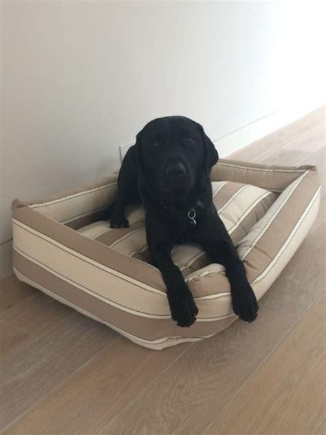 best dog beds for labs best dog beds for labradors labrador dog beds