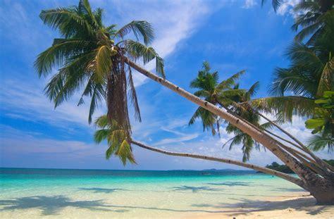 photography nature landscape palm trees white sand
