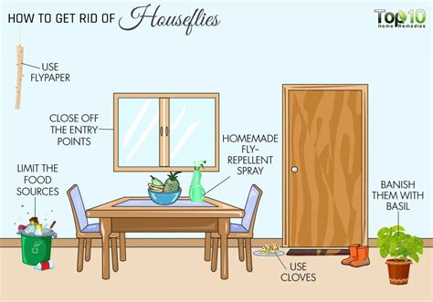home remedies for house flies how to get rid of flies in your house houseflies top