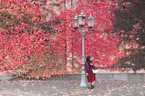 perfecto comptoir des cotonniers l automne pauline