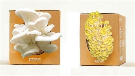 memungut peruntungan benih jamur dalam kotak