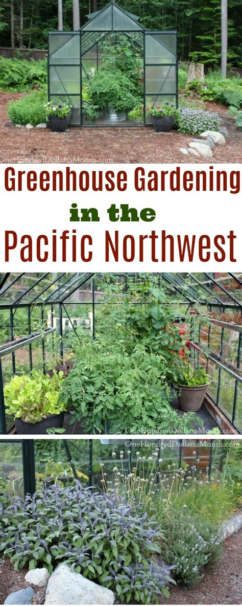 gardening in the pacific northwest the complete homeowner s guide books greenhouse gardening in the pacific northwest tomatoes