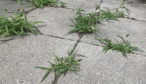 Patio Pavers Weeds How To Get Rid Of Weeds On A Patio And Keep Them From