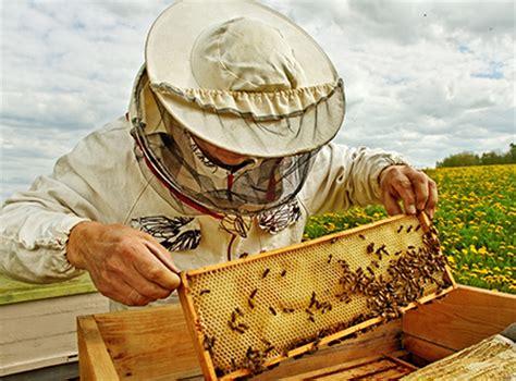 apiculteur débutant : débuter l'apiculture