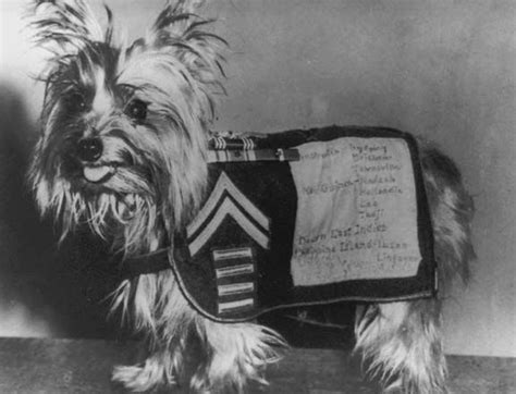 what are yorkies known for 17 best images about quot quot yorkies on yorkie and
