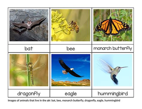 printable animal sorting cards sorting animals that live on land air and water