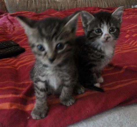katzenbabys suchen ein zuhause s 252 223 e katzenbabys suchen ein sch 246 nes neues zuhause in