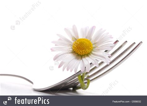 flower foods stock flower foods stock flower foods stock flower food stock