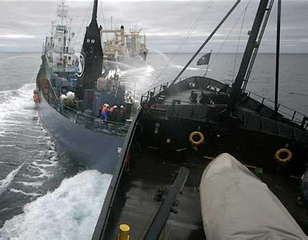 sea shepherd steve irwin sinks sea shepherd s steve irwin collides with the of a