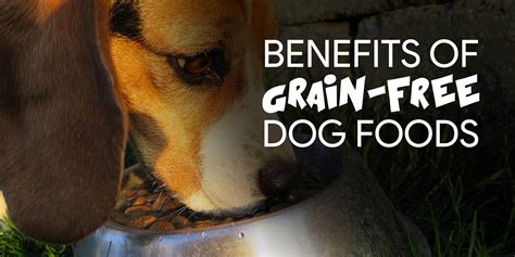 grain free food benefits 12 wonderful benefits of a grain free diet for dogs