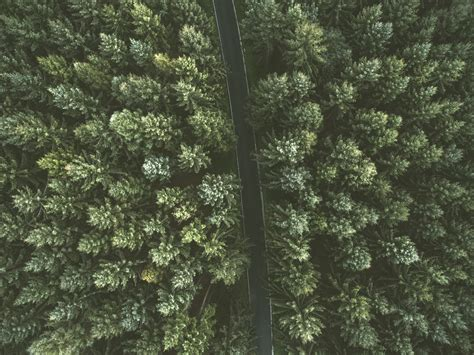 road forest aerial view  tree top hd  wallpaper
