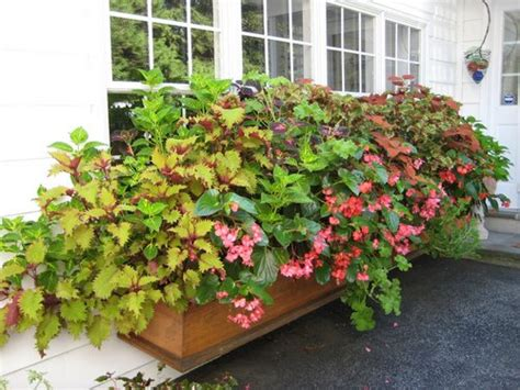flowers for window boxes in partial shade world is more beautiful with plants in window boxes www