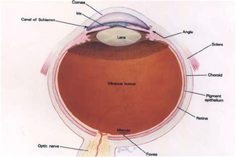 lens implants « anderson eye surgery